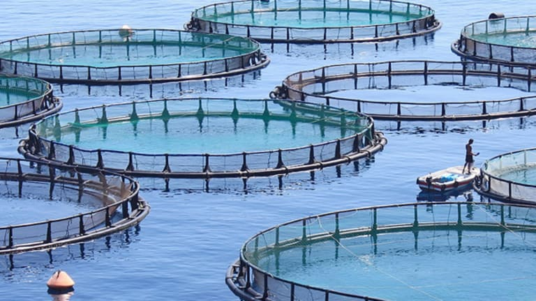 Why Dealmakers Are Getting Hooked on Aquaculture