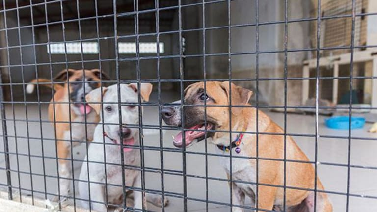 Should You Buy Your Dog from a Shelter or a Pet Store?