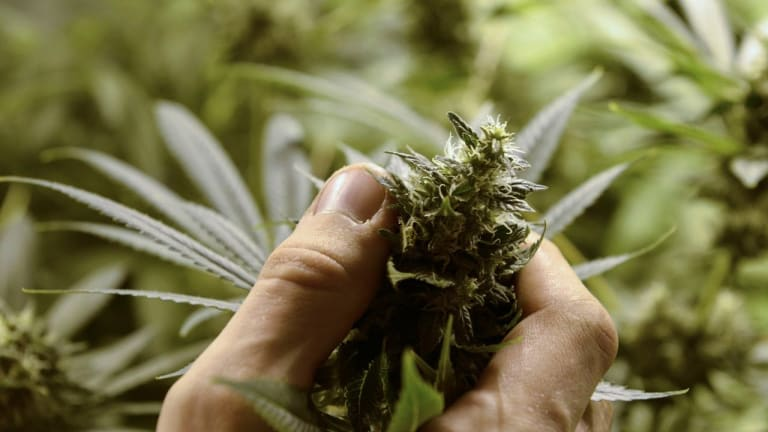 Here Is Why These 3 Marijuana Stocks Haven't Even Started to Peak