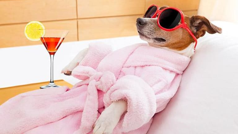 4 Most Expensive Ways to Pamper Your Pet