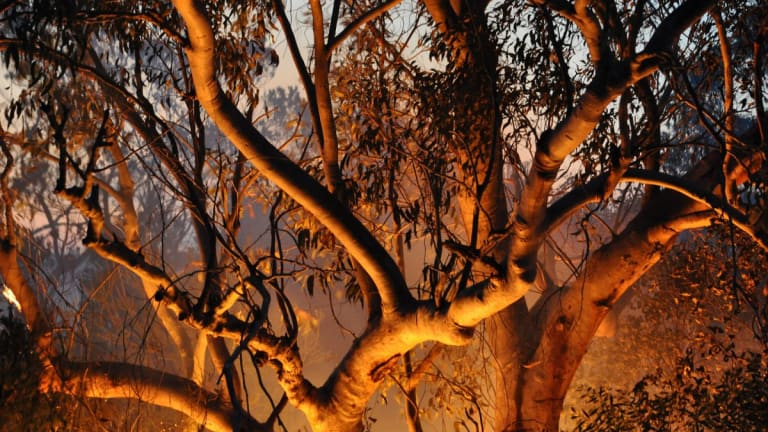 Why Blaming the Repo Market is Like Blaming the Australian Bush Fires