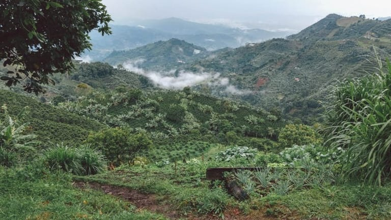 Coffee farmers struggle to adapt to Colombia's changing climate