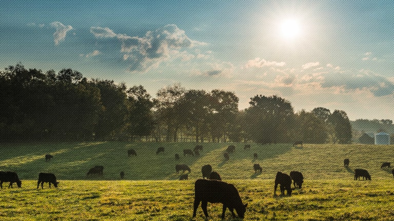 How the Beef Industry Is Managing Pricing During the Pandemic