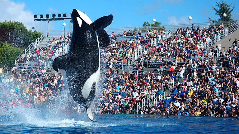 SeaWorld Entertainment Posts Narrower-Than-Expected First-Quarter Loss