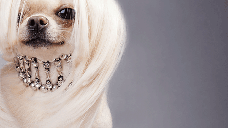 10 Ridiculous Yet Amazing Luxury Products for Dogs - TheStreet
