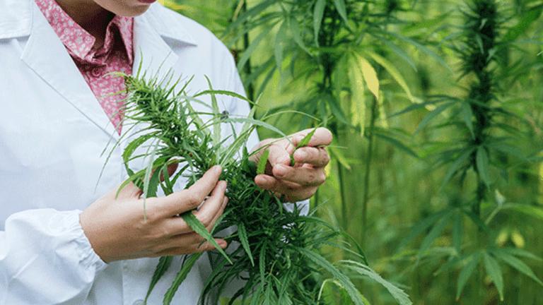 Collect Smokin' Hot Profits From This Marijuana Biotech