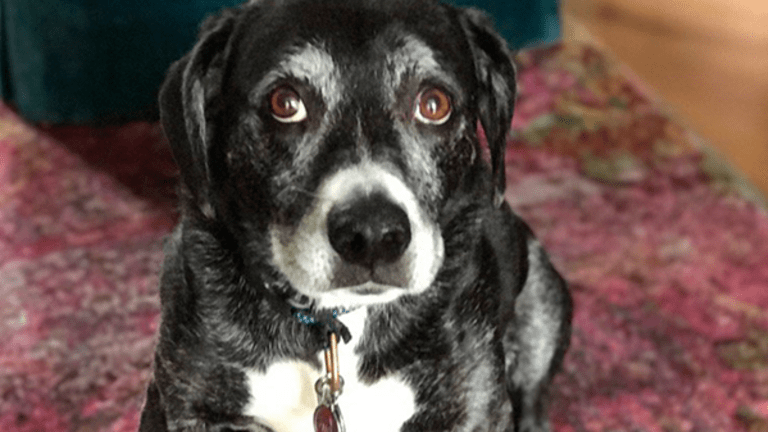 Jim Cramer Suggests Giving Your Dog a Last Name Inspired by a Stock That's Performed Well