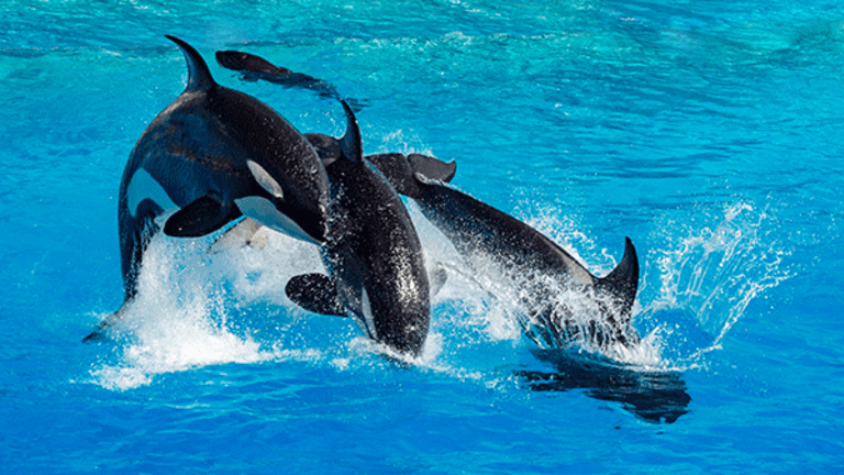 Blackstone Sells 21% SeaWorld Stake to Chinese Holding Company