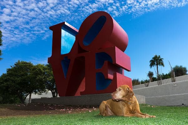 1. Scottsdale, Ariz.Pet budget-friendliness rank: 80Pet health and wellness rank: 1Outdoor pet-friendliness rank: 6Scottsdale leads the pack for being overall the most pet-friendly city, and ranks No. 1 for pet health and wellness (despite the hot summer pavement.)Photo: Shutterstock