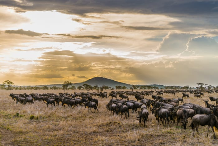 """This vast park in northern Tanzania is famous for its massive annual migration of wildebeest and zebra. The Maasai call the plains of Serengeti National Park """"the place where the land moves on forever."""""""