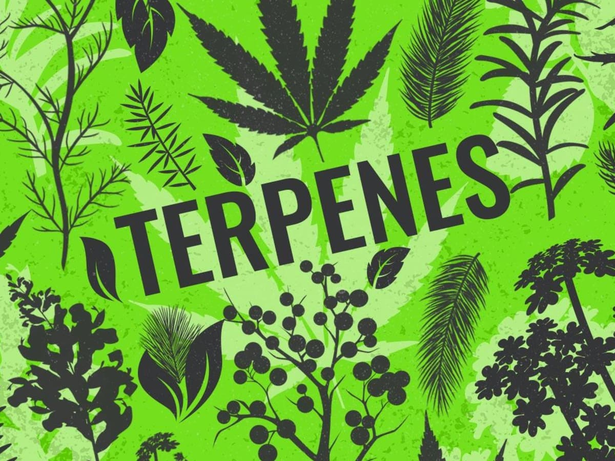 Terpenes: Effects, Examples and Products - TheStreet