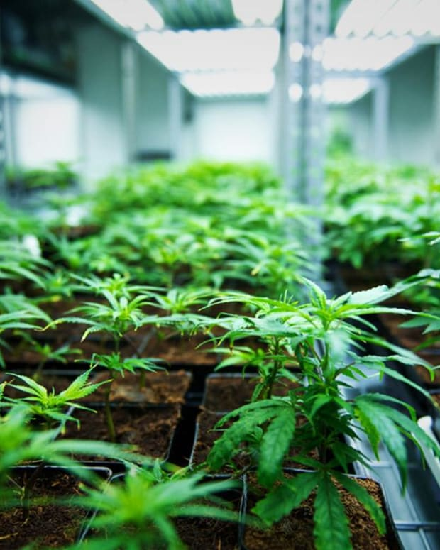 Here's How Tilray Is Doing Ahead of Monday's Earnings Release