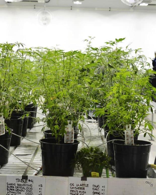 Midday Wrap: Canopy Growth, Box Inc Receive Downgrades