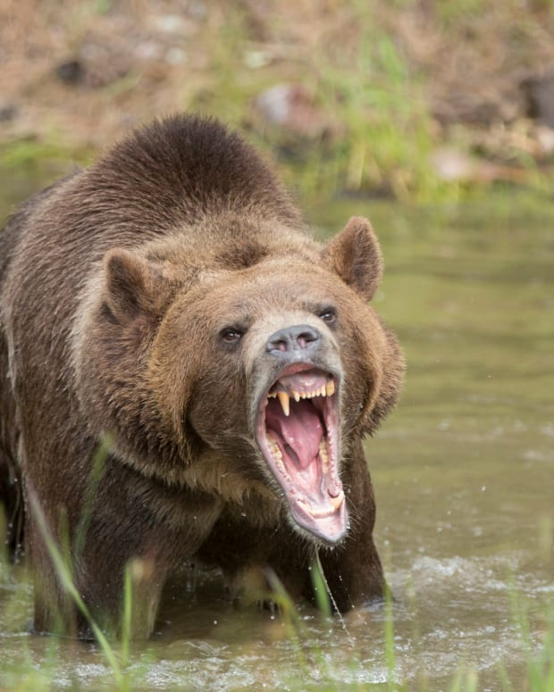 The Bears Are Starting to Attack the Stock Market, and It's Not Surprising