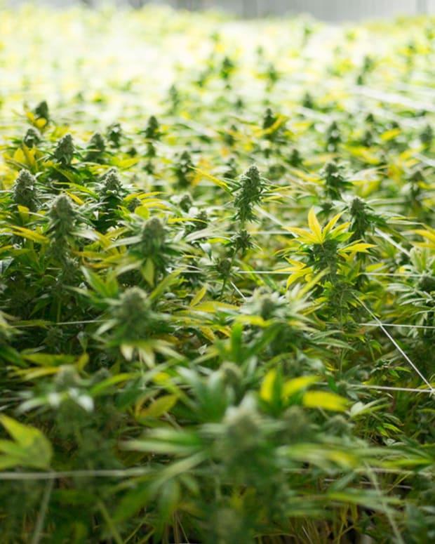Trulieve Cannabis Lead