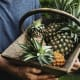 More than 80% of the pineapples tested had no pesticide residues.