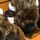 Plush buffalo in the gift shop. Photo: TheStreet