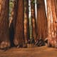 Sequoia National ParkCaliforniaLocated in California's Sierra Nevada mountain range, the 275-foot high General Sherman Tree dominates this forest of ancient, giant trees. An underground cave features streams and striking rock formations. The Tunnel Tree is a toppled tree that was cut to allow cars to drive underneath.Photo: Shutterstock