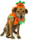 Most Popular Pet CostumesPumpkin: 11.2%Out of the 31.3 million Americans planning to dress their pets in costumes, millennials (aged 25-34) are the most likely to dress up their pets. The most popular pet costume is a pumpkin.Photo: Shutterstock