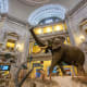 National Museum Of Natural History, Washington, D.C.2017 attendance: 6 millionThis free museum is run by the Smithsonian. It has an extensive collection of natural history specimens and human artifacts, remains of dinosaurs and tools used by early man.Above, the African elephant in the Museum of Natural History.Photo: Tinnaporn Sathapornnanont / Shutterstock