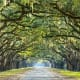 This route takes you to Savannah, Ga., one of the most charming and beautiful cities in the country, and a popular tourist destination. Above, a tree-lined road at the historic Wormsloe Plantation in Savannah.Photo: Shutterstock