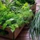 HerbsIllnesses: 476Outbreaks: 7Photo: Shutterstock