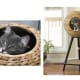 Sauder Woodworking Natural Sphere Cat Tower$189.53 at HayneedleFinally, cat furniture that won't burn your eyes when you look at it. This cat tower has a tripod stand with an architectural look, a natural banana leaf sphere with two cat-access holes and a machine-washable cushion inside. One leg is wrapped in sisal rope for scratching and a carpeted base with hanging toy provides a lounging spot that doubles as a play area.Photo: Hayneedle
