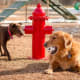 BarkPark Dog Park Fire Hydrant$387 on AmazonThis 2-foot red hydrant is fun decor for the local dog park. It's made of steel and coated with thermoplastic (you know why.) If you'd prefer something more authentic, real fire hydrants can cost from $3,700 to $5,953, according to hydrant maker Kennedy Valve.Photo: BarkPark/Amazon