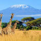 Kenya: 10.2%Kenya is home to savannah, lakelands, the Great Rift Valley and mountain highlands. Popular activities include safaris to the Maasai Mara Reserve and Amboseli National Park to see lions, elephants, rhinos and other wildlife.Photo: Shutterstock