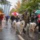 7. AtlantaPet budget-friendliness rank: 23Pet health and wellness rank: 6Outdoor pet-friendliness rank: 71Atlanta is one of six cities with the most dog-friendly restaurants per capita; it also ranks fourth for the most animal shelters per capita. Above, dogs and members of the Great Pyrenees Rescue of Atlanta march in a 2018 Christmas parade.Photo: Lee Reese / Shutterstock