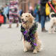 8. St. LouisPet budget-friendliness rank: 17Pet health and wellness rank: 20Outdoor pet-friendliness rank: 45St. Louis ranks third for the most animal shelters per capita. Above, a dog in the Beggin' Pet Parade in St. Louis.Photo: Roberto Galan / Shutterstock