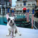 6. Las VegasPet budget-friendliness rank: 60Pet health and wellness rank: 9Outdoor pet-friendliness rank: 4Las Vegas one of six cities with the most veterinarians per capita, as well as the most pet businesses per capita. Above, a French bulldog at the Venetian Resort in Las Vegas.Photo: Shutterstock