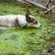 Algae Blooms.The rapid growth of algae can cause harm to animals, people,and the local ecology.These algae bloomsmay look like scum on the water and can produce toxins that can cause a variety of illnesses in people and animals. In August 2019, three dogs died from toxic algae within hours of swimming in a North Carolina pond, CNN reported.The algae blooms can occur in warm fresh, marine, or brackish waters with abundant nutrients and are becoming more frequent with climate change, according to the CDC.Photo: Shutterstock