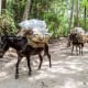 27. ColombiaPlastic Waste Generation Per Year: 2.41 million tonsAbove, donkeys transport garbage out of Tayrona National Park, Colombia.Photo:  Matyas Rehak / Shutterstock