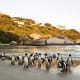 Take a cable car to the top of Table Mountain, where you can see sweeping views of the city. See penguins on Boulders Beach, above, one of the few places where African penguins can be observed at close range. The penguinslive incongruously in the middle of a residential area and wander freely in a protected area.Photo: Shutterstock