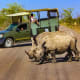 Top 5 Adventure Destinations:1. South AfricaAbove, white rhinos in in Kruger National Park.Photo: Shutterstock