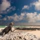 4. Galapagos IslandsThe volcanic archipelago off the coast of Ecuador is considered one of the world's foremost destinations for wildlife-viewing. The unique animal species there inspired Charles Darwin's theory of evolution.Photo: Shutterstock