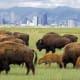 27. ColoradoFirearms Industry Rank: 29Gun Prevalence Rank: 11Gun Politics Rank: 32Photo: Shutterstock