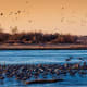 26. NebraskaAffordability Rank: 41Quality of Life Rank: 17Healthcare Rank: 8Above, migratory sandhill cranes on the Platte River in Nebraska.Photo: Shutterstock