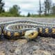"""SnakeYou can eat snake meat. You can also eat tires. Outside Online likens the taste of wild snake meat to """"eating a roasted bike innertube,"""" and it has a lot of bones.Photo: Shutterstock"""