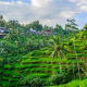 Ubud, BaliCost: $1,220/monthInternet speed: 6 mbpsPhoto: Shutterstock