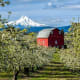44. OregonOther Rankings:Affordability: 37Crime: 30Culture: 6Weather: 35Wellness: 45Photo: Shutterstock
