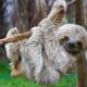 13. Costa RicaA sloth in a rescue center in San Jose, Costa Rica.Photo: Shutterstock