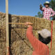 Straw and thatch have been used to build houses for about as long as people have wanted a roof over their heads. Today, due to its low cost, availability and excellent insulation properties, straw bale construction is an important segment of the growing green building revolution. Photo Credit: iphilipp