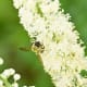 The claim: Black cohosh has long been used by Native Americans to treat hot flashes and other symptoms of menopause, as well as PMS, acne and osteoporosis, according to the NIH. What critics say: Like many other dietary supplements, there isn't much reliable scientific evidence that black cohosh is safe and effective in the long term. The NIH also notes that menopause is just a normal part of aging and should not be considered a disease. Photo Credit: Wayne National Forest