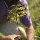 Along with the release of its movie, Earth, Disney (Stock Quote: DIS) and The Nature Conservancy joined forces to plant 2.7 million trees in the endangered Atlantic Forest of Brazil. That was in honor of every ticket sold during the movie's first week in theaters, the company says.And earlier this year, the Walt Disney Company set goals to reduce its impact on water and ecosystems and cut emissions, waste, electricity and fuel use. The company has already started using energy-saving fixtures like compact fluorescent lamps and LED lights.And we can't forget the impact of recycling by such a corporate giant. In 2007 alone, the company recycled 1,048 tons of scrap metal; about 1.3 million pounds of cooking grease and 14 million pounds of cardboard. Leftover prepared food is given to the Second Harvest Food Bank of Central Florida and manure from Disney's Animal Kingdom contributes to the production of 542,000 pounds of compost per day, the company says.Photo Credit: Disney