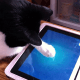 Apple or Google AndroidWe aren't telling you to drop $70 to $300 on a tablet for your cats. However, given the sheer number of apps developed solely for amusing your cats, you may want to think about at least investing one with a particularly scratch-resistant touchscreen or a screen that's easily cleaned. Just think about the first thing your cat goes for when it exits the litter box and the last time you touched your tablet and felt the grainy resistance of litter... or worse.
