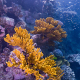 """The Great Barrier Reef is dying. One of the most misunderstood aspects of global warming is the severe damage that small changes can do. An increase of one degree might not sound like much, but it represents significant, chaotic changes across many ecosystems. Water levels may rise in one country while receding in another. Some places will get hotter while others, seemingly paradoxically, get colder because of disrupted weather patterns.Meanwhile all that carbon dioxide in the air is steadily finding its way into the ocean, making it increasingly acidic. Coral, already delicate as it is, can't handle those changes.""""The ocean acidification is really bad for coral specifically,"""" Arndt said. """"When you consider that it [coral] is calcium carbonate, it's one of the reasons along with the temperature of the water that causes things like the Great Barrier Reef, large sections of it, to die off.""""Biologists call the process """"coral bleaching,"""" when coral turns white as it dies and becomes essentially a chunk of rock."""
