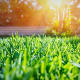 """According to the 2016 National Gardening Survey from the National Gardening Association, U.S. households spent about $36.9 billion on their lawns and gardens in 2016. """"If you're new to homeownership, joining the lawn and garden crowd may seem like an intimidating and expensive prospect,"""" says Carson Yarbrough, consumer insights specialist at Savings.com. """"Many go the route of paying a lawn service because the upfront investment and time associated with self-management can seem overwhelming. However if you run the numbers, paying a lawn service can seriously add up."""" According to Long, paying a lawn service can between $1,000 and $1,600 per year to the household budget bill."""