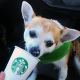 Starbucks doesn't advertise its Puppuccino, but dog owners know it's on the coffee king's secret menu. When Cujo needs his coffee fix - minus the caffeine - after his morning run, there's no better place to get it than Starbucks.Starbucks actually has a long list of secret drink items just waiting to be unlocked.Starbucks is a holding in Jim Cramer's Action Alerts PLUS Charitable Trust Portfolio. Want to be alerted before Cramer buys or sells SBUX? Learn more now.